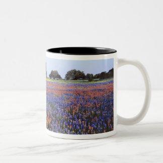 USA, Texas, Llano. Bluebonnets and redbonnets Two-Tone Coffee Mug