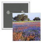 USA, Texas, Llano. Bluebonnets and redbonnets Pins