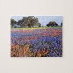 USA, Texas, Llano. Bluebonnets and redbonnets Puzzle