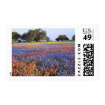 USA, Texas, Llano. Bluebonnets and redbonnets Stamp