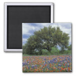 USA, Texas, Marble Falls Paintbrush and 2 Inch Square Magnet