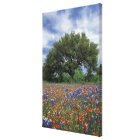 USA, Texas, Marble Falls Paintbrush and Canvas Print