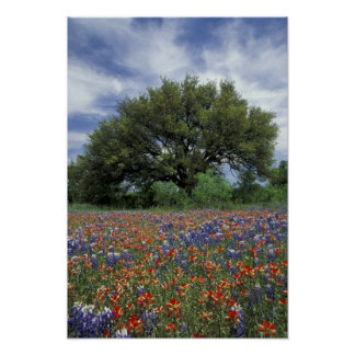 USA, Texas, Marble Falls Paintbrush and Poster