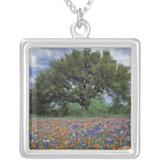 USA, Texas, Marble Falls Paintbrush and Silver Plated Necklace