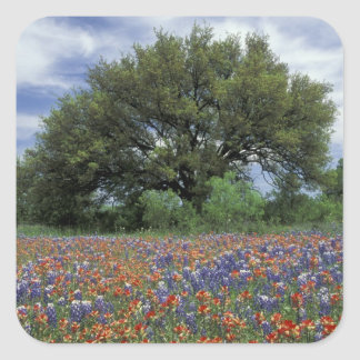 USA, Texas, Marble Falls Paintbrush and Sticker