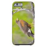 USA, Texas, Mission, Dos Venadas Ranch. Close-up Tough iPhone 6 Case