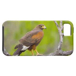 USA, Texas, Mission, Dos Venadas Ranch. Close-up iPhone SE/5/5s Case