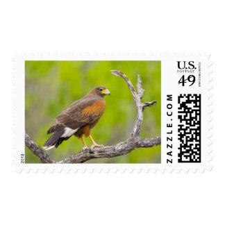 USA, Texas, Mission, Dos Venadas Ranch. Close-up Postage Stamp