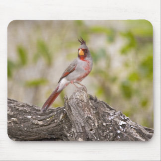 USA, Texas, Mission, Dos Venadas Ranch. Male Mouse Pad