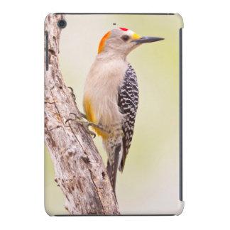 USA, Texas, Mission, Martin-Javelina Ranch. Male iPad Mini Case