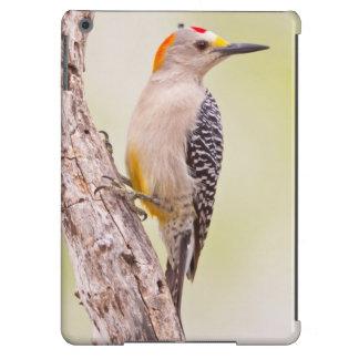 USA, Texas, Mission, Martin-Javelina Ranch. Male iPad Air Covers