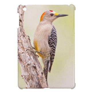 USA, Texas, Mission, Martin-Javelina Ranch. Male iPad Mini Covers