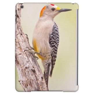 USA, Texas, Mission, Martin-Javelina Ranch. Male iPad Air Cases