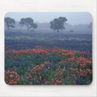 USA, Texas, near Lytle Fog, oaks, blue bonnets Mouse Pad