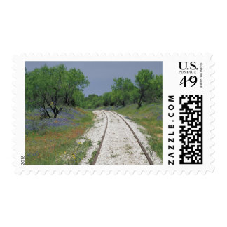 USA, Texas, near Marble Falls, Blue bonnets and Postage