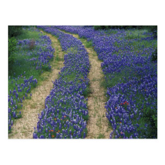 USA, Texas, near Marble Falls, Tracks in blue Postcard