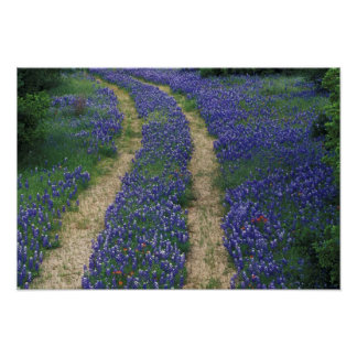 USA, Texas, near Marble Falls, Tracks in blue Poster