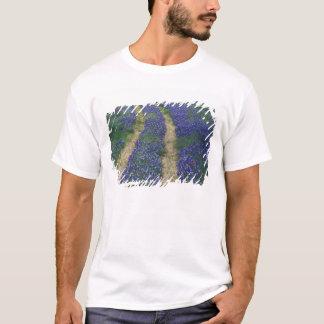 USA, Texas, near Marble Falls, Tracks in blue T-Shirt