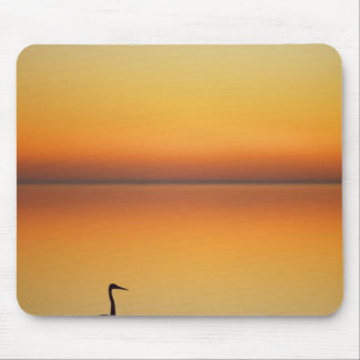 USA, Texas, Port Aransas, Great Blue Heron at Mouse Pad