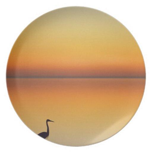 USA, Texas, Port Aransas, Great Blue Heron at Plates