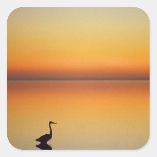 USA, Texas, Port Aransas, Great Blue Heron at Square Sticker