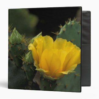 USA, Texas, Prickly Pear Cactus in bloom. Binder