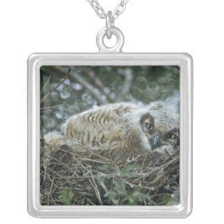 USA, Texas, Rio Grande Valley, McAllen. Close-up Silver Plated Necklace