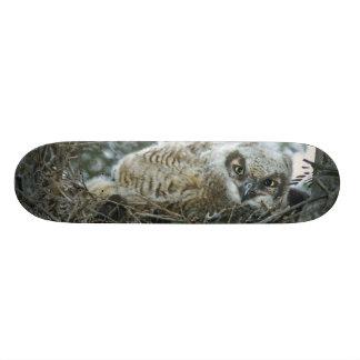 USA, Texas, Rio Grande Valley, McAllen. Close-up Skateboard Deck