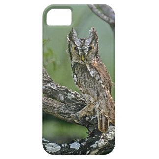 USA, Texas, Rio Grande Valley, McAllen. Eastern iPhone SE/5/5s Case