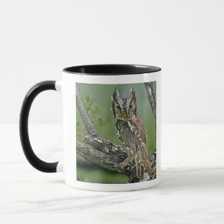 USA, Texas, Rio Grande Valley, McAllen. Eastern Mug