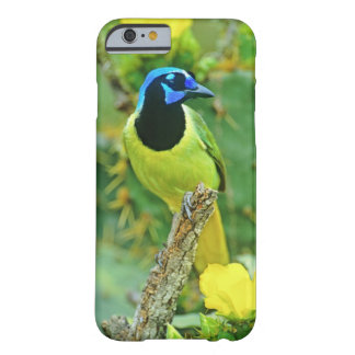 USA, Texas, Rio Grande Valley, McAllen. Green Barely There iPhone 6 Case