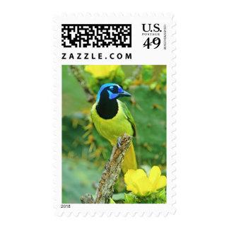 USA, Texas, Rio Grande Valley, McAllen. Green Stamps