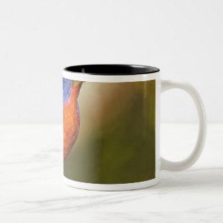 USA, Texas, Rio Grande Valley, McAllen. Male 2 Two-Tone Coffee Mug