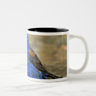 USA, Texas, Rio Grande Valley, McAllen. Male 3 Two-Tone Coffee Mug