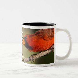 USA, Texas, Rio Grande Valley, McAllen. Mated Two-Tone Coffee Mug