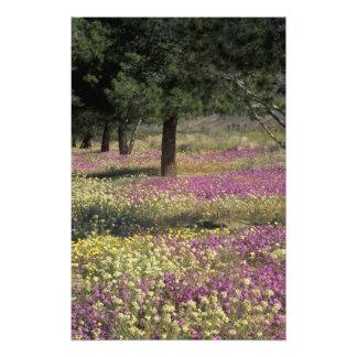USA, Texas, Sand Verbena and Brown-eyed Photo Print