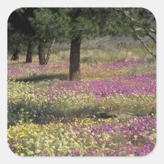 USA, Texas, Sand Verbena and Brown-eyed Square Sticker