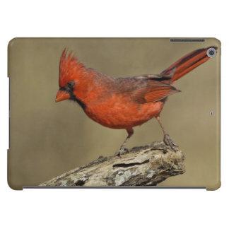 USA, Texas, Santa Clara Ranch. Northern Cardinal iPad Air Cover