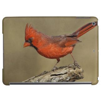 USA, Texas, Santa Clara Ranch. Northern Cardinal Cover For iPad Air