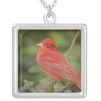USA, Texas, South Padre Island. Close-up of male Square Pendant Necklace