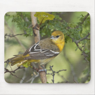 USA, Texas, South Padre Island. Portrait of 3 Mouse Pad