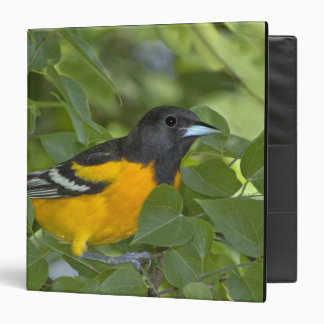 USA, Texas, South Padre Island. Portrait of 3 Ring Binder