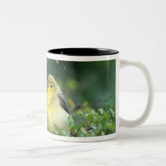 USA, Texas, South Padre Island. Wild female Two-Tone Coffee Mug