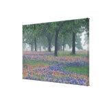 USA, Texas, Texas Hill Country Expansive field Gallery Wrapped Canvas