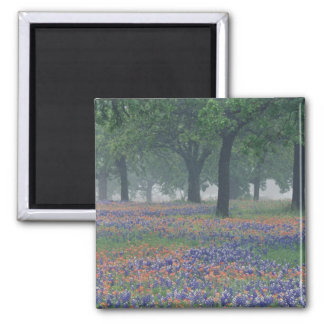 USA, Texas, Texas Hill Country Expansive field Magnet