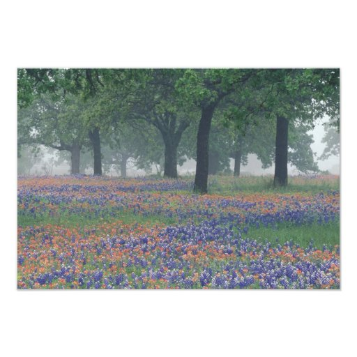 USA, Texas, Texas Hill Country Expansive field Art Photo