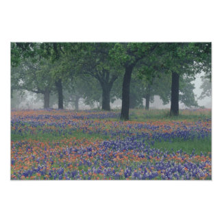 USA, Texas, Texas Hill Country Expansive field Poster