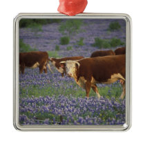 USA, Texas, Texas Hill Country, Hereford Metal Ornament