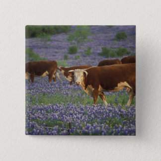 USA, Texas, Texas Hill Country, Hereford Pinback Button