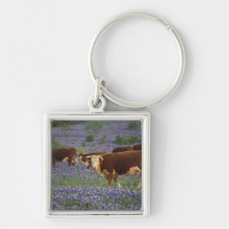 USA, Texas, Texas Hill Country, Hereford Silver-Colored Square Keychain